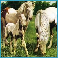 Giandomenico Ferri - Dogs and horses